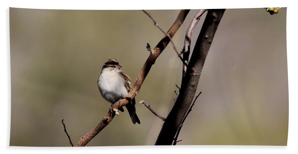 Sparrow Beach Towel featuring the photograph Go Ahead...make My Day by Travis Truelove