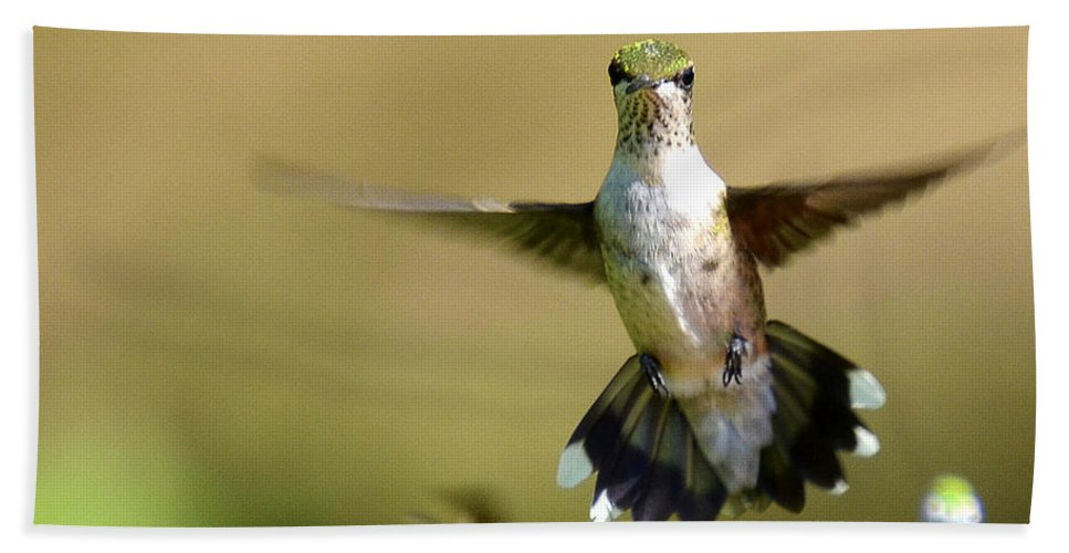 Hummingbird Beach Towel featuring the photograph Going My Way by TJ Baccari