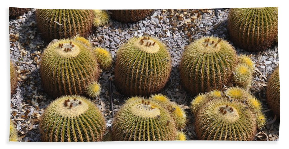 California Beach Towel featuring the photograph Golden Barrel Cactus 2 by Rich Bodane