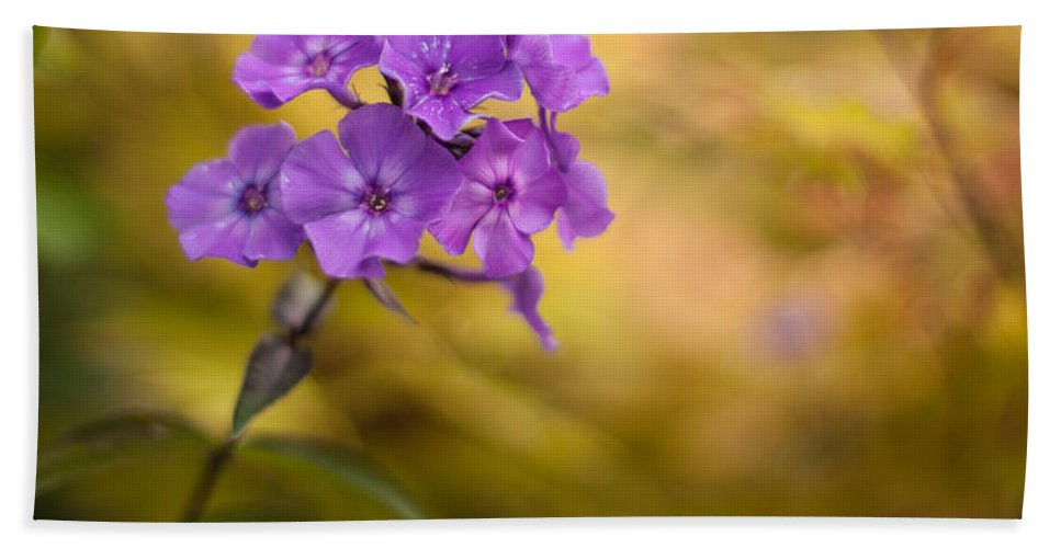 Flower Beach Towel featuring the photograph Golden Violets by Mike Reid