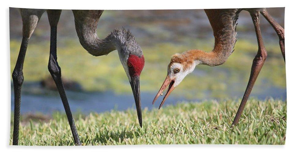 Feeding Birds Beach Towel featuring the photograph Good Catch by Carol Groenen