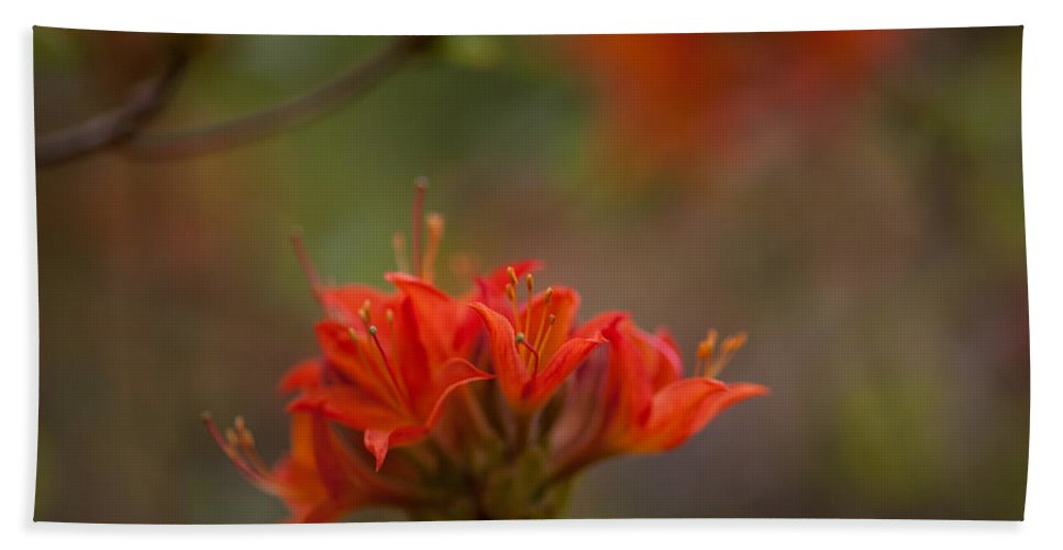 Rhodies Beach Towel featuring the photograph Gorgeous Cluster by Mike Reid