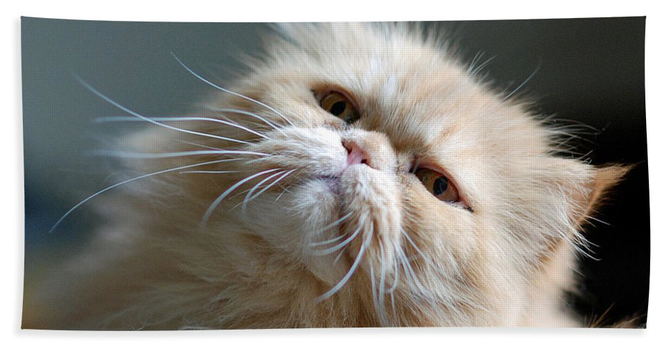Animals Beach Towel featuring the photograph Gracie by Lisa Phillips