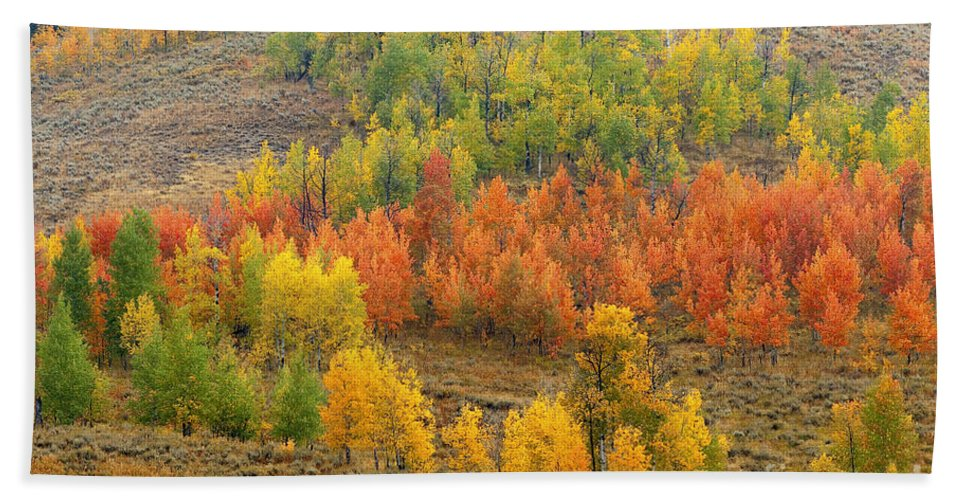 Bronstein Beach Towel featuring the photograph Grand Teton Fall Color by Sandra Bronstein