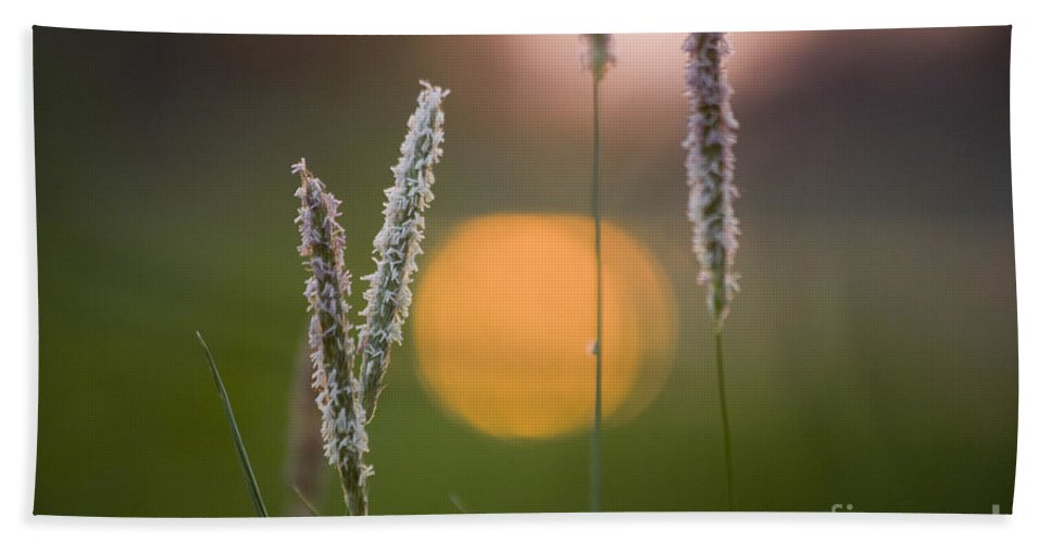 Heiko Beach Towel featuring the photograph Grass Blooming by Heiko Koehrer-Wagner