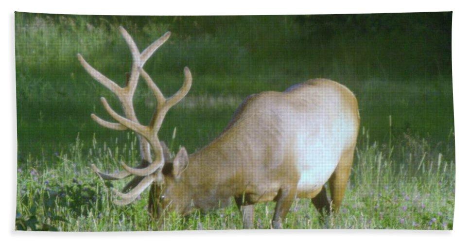 Elk Beach Towel featuring the photograph Grazing Elk by Jeff Swan