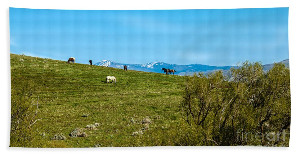 Range Land Beach Towel featuring the photograph Grazing Horses by Robert Bales