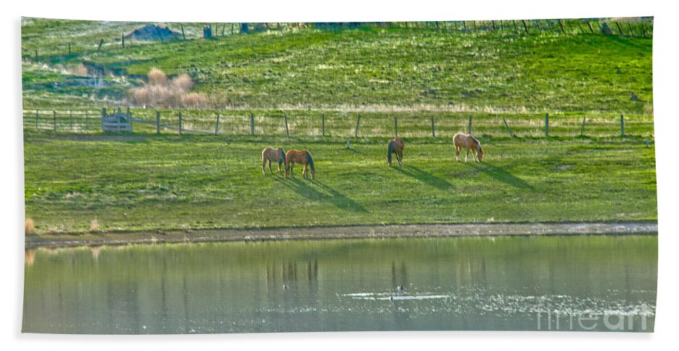 Ranch Beach Towel featuring the photograph Grazing by Robert Bales