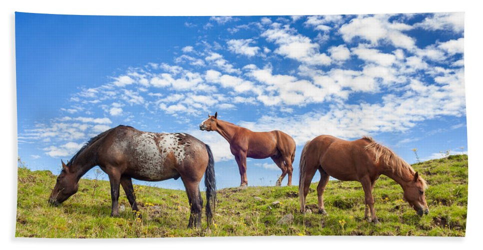 Animal Beach Towel featuring the photograph Grazing by Semmick Photo