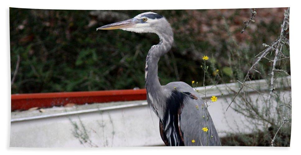 Bird Beach Towel featuring the photograph Great Blue Heron - Blue Man Flew by Travis Truelove
