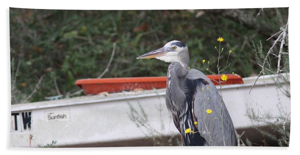 Egret Beach Towel featuring the photograph Great Blue Heron - Chicken Of The Sea by Travis Truelove