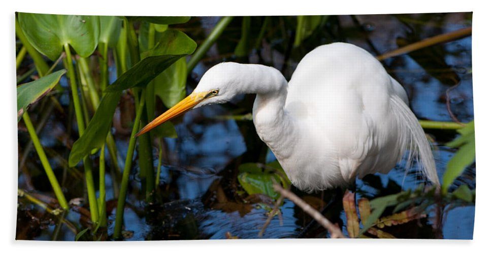 Great Egret Beach Towel featuring the photograph Great Egret Fishing by Christine Stonebridge