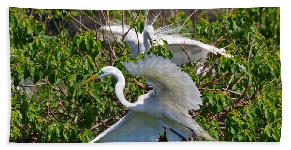 Egret Beach Towel featuring the photograph Great Egret In Flight by Louise Heusinkveld