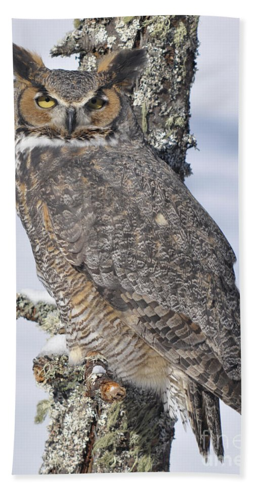 Owl Beach Towel featuring the photograph Great Horned Owl Portrait by Ronald Grogan
