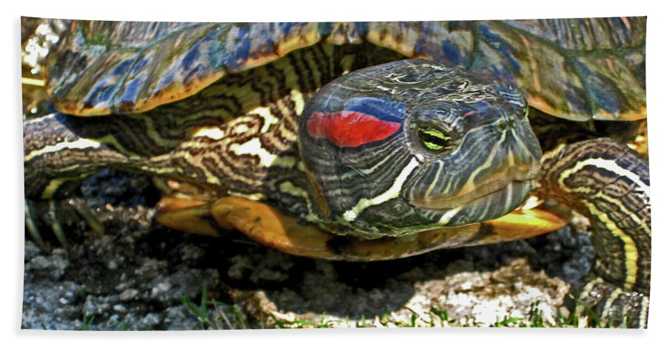 Turtle Beach Towel featuring the photograph Green Eyed Lady by Lorraine Devon Wilke