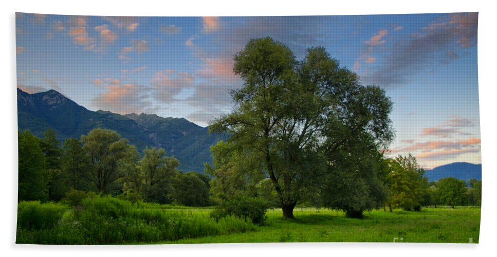 Trees Beach Towel featuring the photograph Green Field With Trees by Mats Silvan