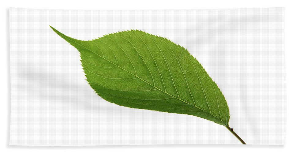 Nature Beach Towel featuring the photograph Green Leaf by Photo Researchers