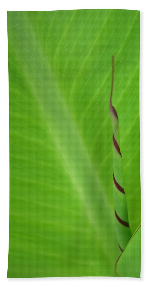 Green Leaf Beach Towel featuring the photograph Green Leaf With Spiral New Growth by Nikki Marie Smith