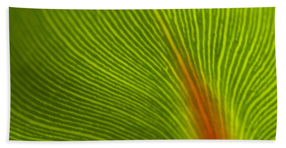 Leaf Beach Towel featuring the photograph Green Leaves Series 10 by Heiko Koehrer-Wagner
