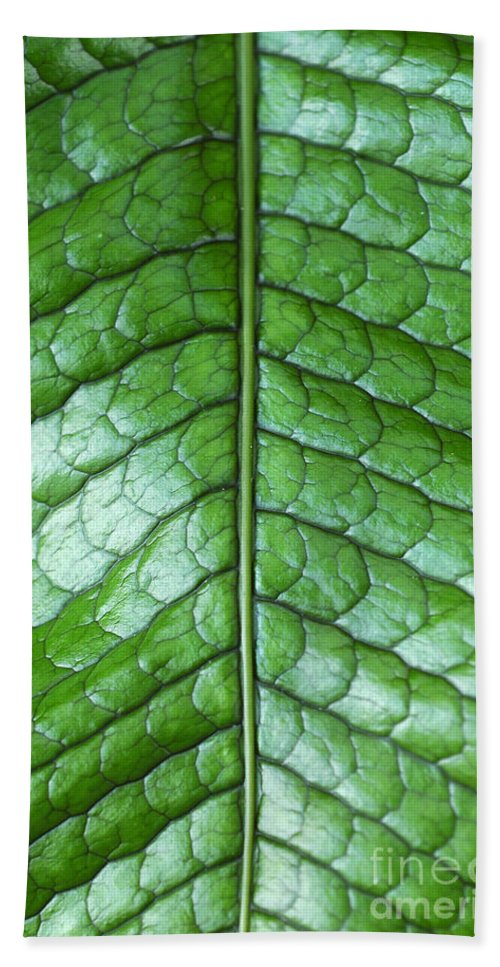 Green Beach Towel featuring the photograph Green Scaly Leaf Pattern by Mike Nellums