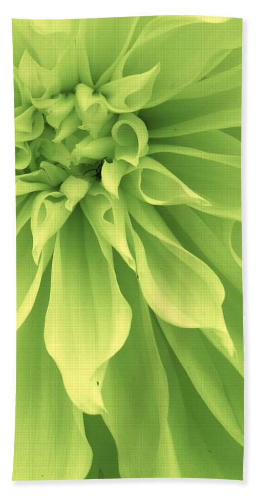 Flora Beach Towel featuring the photograph Green Sherbet by Bruce Bley