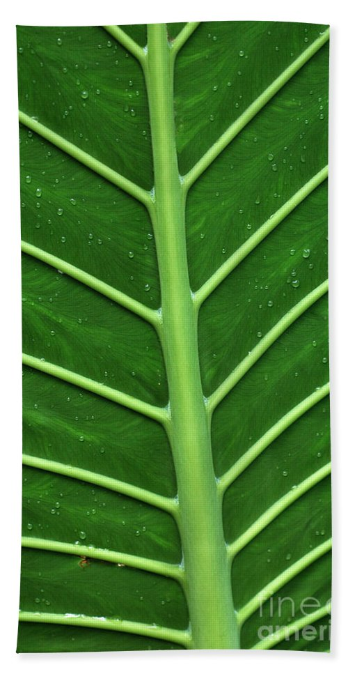 Green Beach Towel featuring the photograph Green Veiny Leaf 1 by Mike Nellums