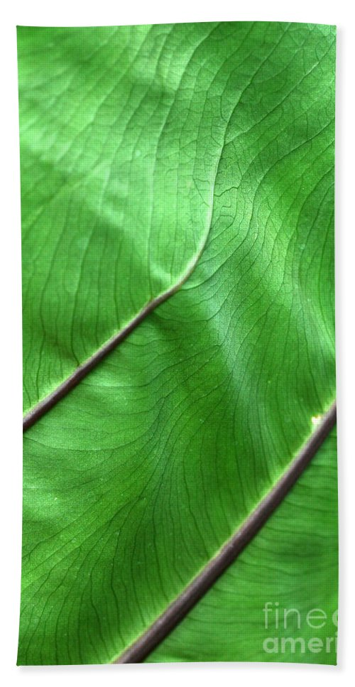 Green Beach Towel featuring the photograph Green Veiny Leaf 2 by Mike Nellums