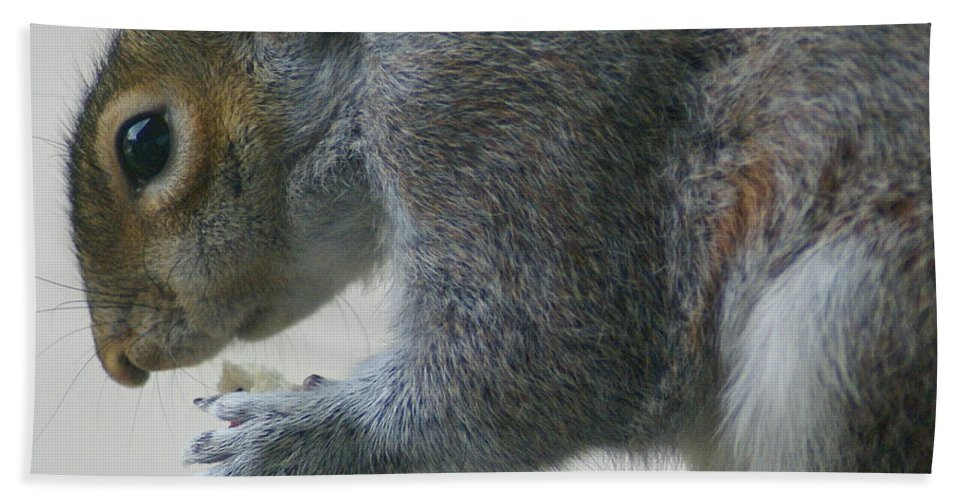 Squirrel Beach Towel featuring the photograph Grey Squirrel Dining Out by Ben Upham III