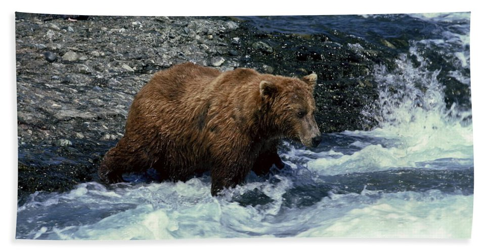 Grizzly Bear Fishing Beach Towel featuring the photograph Grizzly Bear Fishing by Sally Weigand