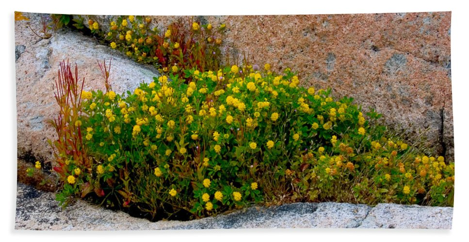 Rock Beach Towel featuring the photograph Growing In The Cracks by Brent L Ander