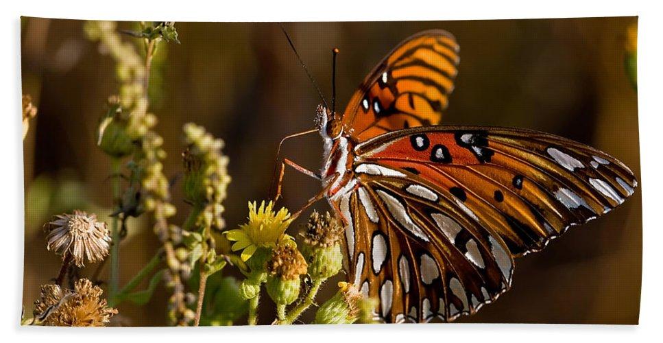Butterfly Beach Towel featuring the photograph Gulf Fritillary by Dan Wells