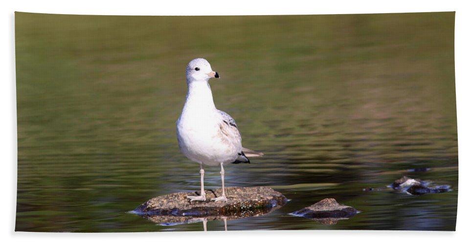 Gulls Beach Towel featuring the photograph Gull - Don't Get Wet Feet by Travis Truelove