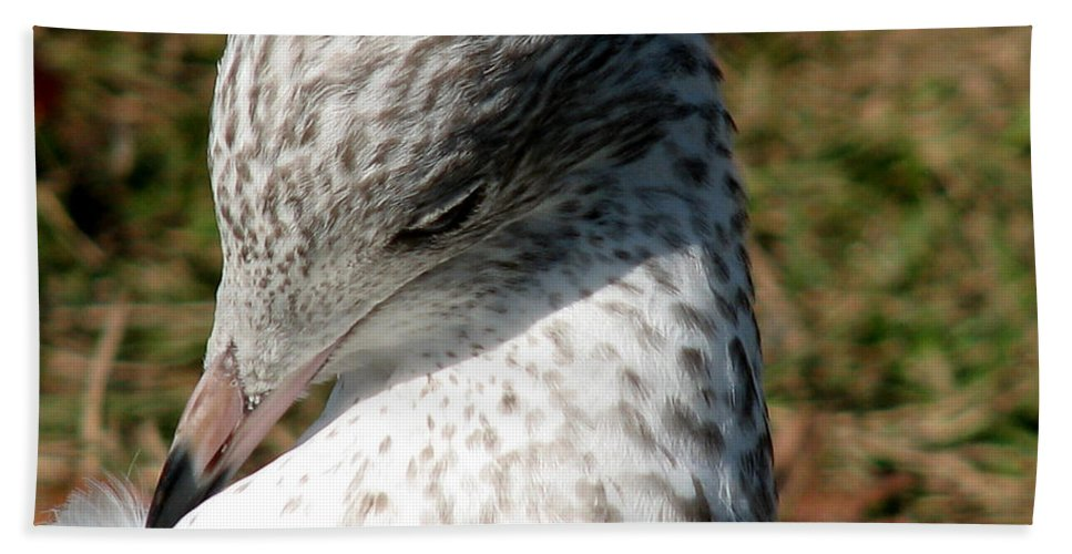 Gull Beach Towel featuring the photograph Gull by Ericamaxine Price