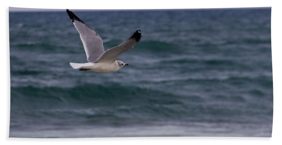 Ocean Beach Towel featuring the photograph Gull In Flight by Roger Wedegis