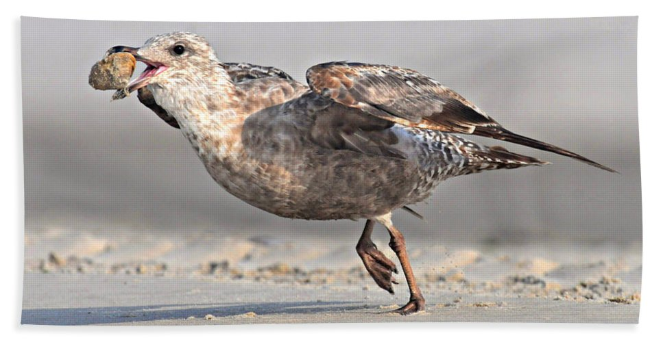 Gull Beach Towel featuring the photograph Gull Taking Off by Dave Mills