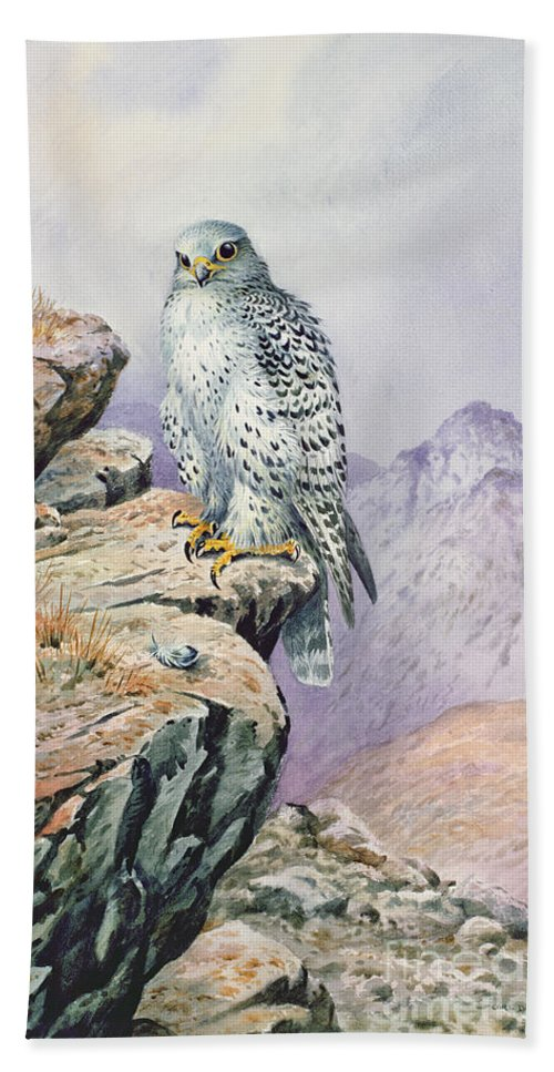 Bird Of Prey Beach Towel featuring the painting Gyrfalcon by Carl Donner