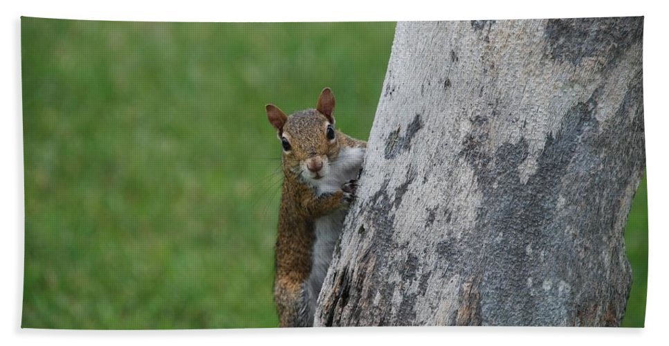 Squirrel Beach Towel featuring the photograph Hanging And Chilling by Rob Hans