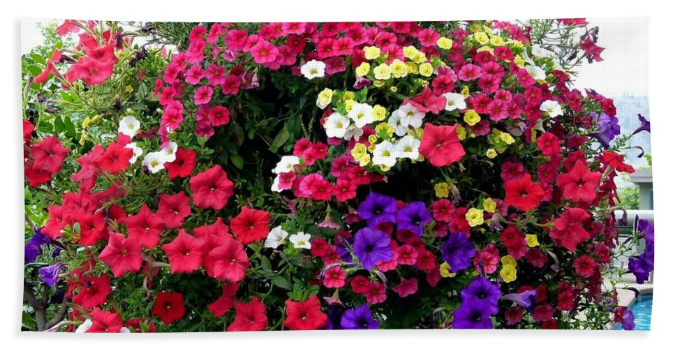 Hanging Basket Beach Towel featuring the photograph Hanging Basket by Will Borden