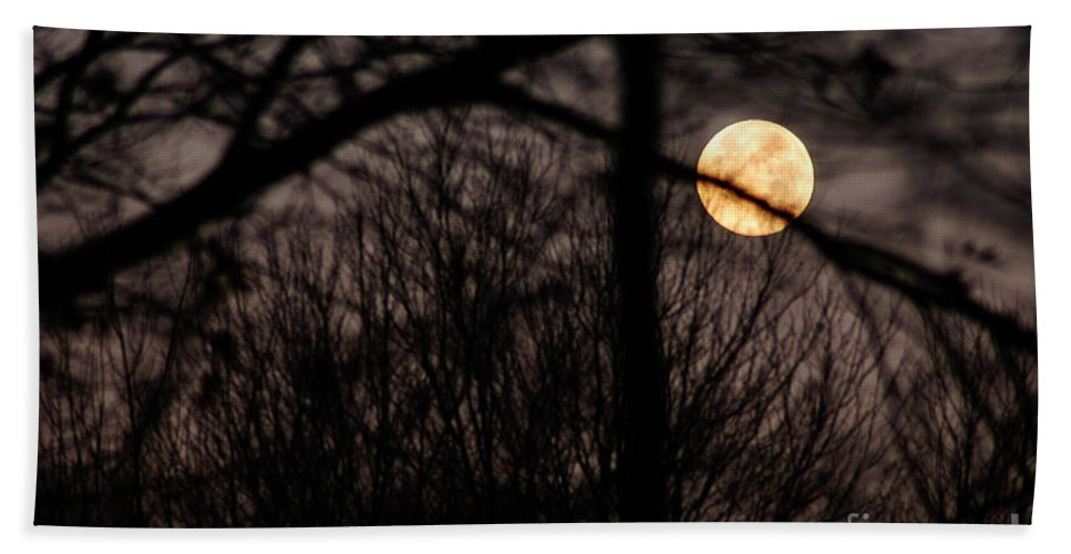 Clay Beach Towel featuring the photograph Haunted Forest by Clayton Bruster