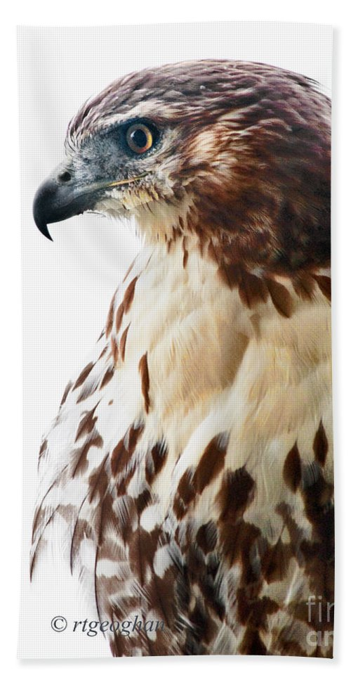 Hawk Beach Towel featuring the photograph Hawk Majesty by Regina Geoghan
