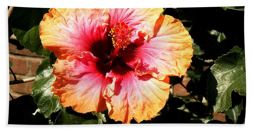 Hibiscus Flower Beach Towel featuring the photograph Hibiscus Flower by Lisa Phillips