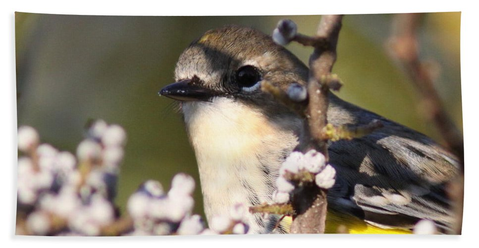 Yellow-rumped Warbler Photos Beach Towel featuring the photograph His Majesty by Travis Truelove