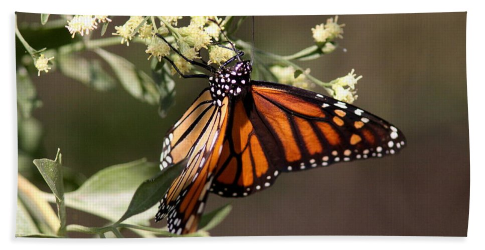 Butterflies Beach Towel featuring the photograph Holding On by Travis Truelove