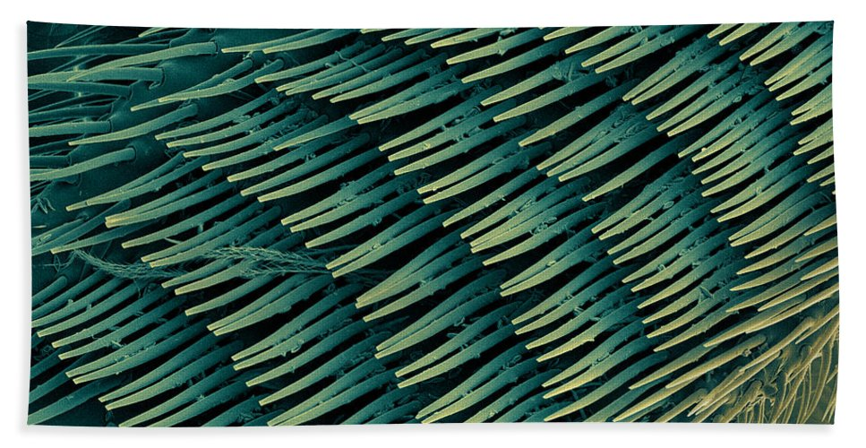 Nature Beach Towel featuring the photograph Honey Bee Leg, Sem by Ted Kinsman
