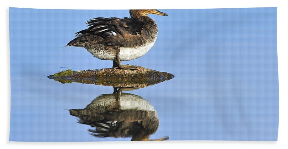 Reflection Beach Towel featuring the photograph Hooded Merganser Reflection by Tony Beck