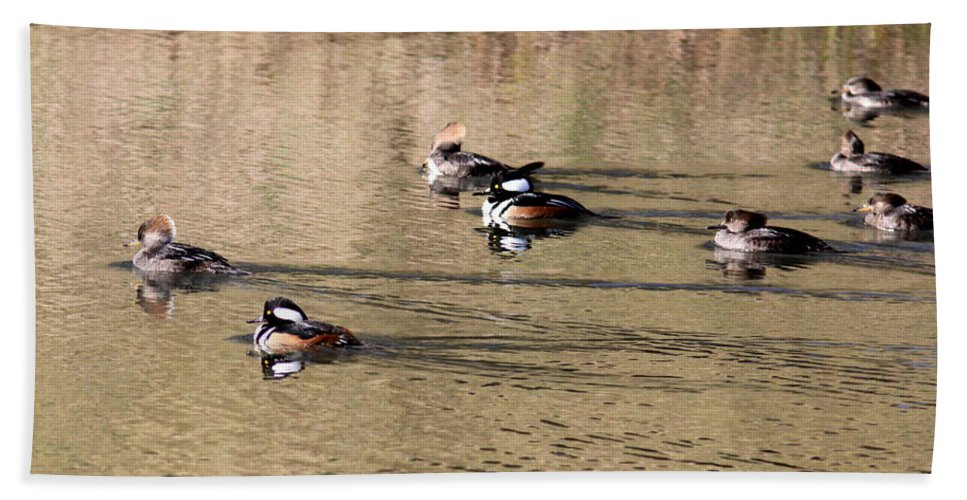 Waterfowl Beach Towel featuring the photograph Hoodie Invasion by Travis Truelove