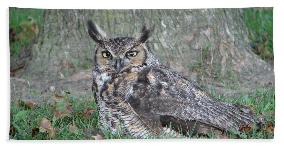 Owl Beach Towel featuring the photograph Horned Owl by Randy J Heath