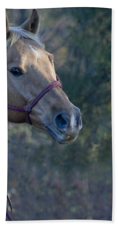 Horse Beach Towel featuring the photograph Horse At Sundown by Kathy Clark
