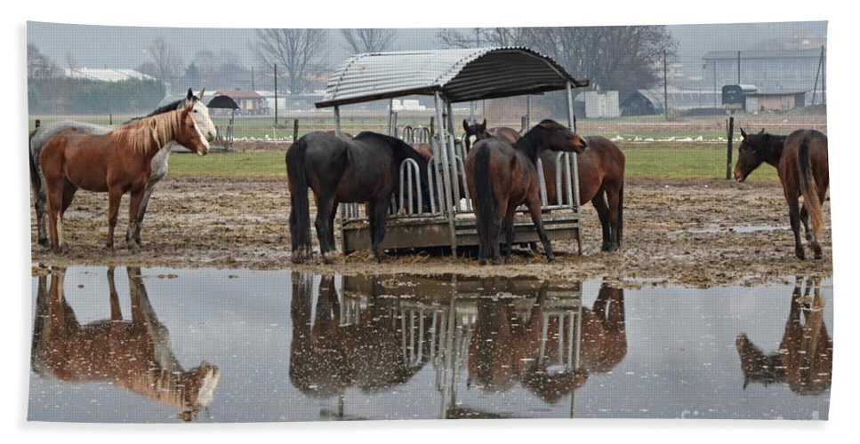 Horses Beach Towel featuring the photograph Horses by Mats Silvan