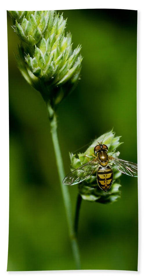 Macro Beach Towel featuring the photograph Hoverfly On Grass by Lori Coleman